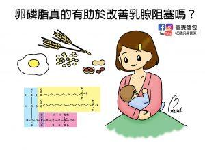 卵磷脂是什麼?哺乳時吃卵磷脂真的有助於改善塞奶(乳腺阻塞)嗎?營養師來告訴你。