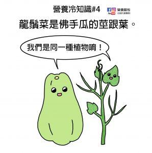 營養冷知識#4:龍鬚菜是佛手瓜的莖跟葉!佛手瓜又稱隼人瓜!?營養師來解析~