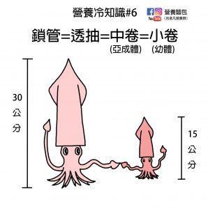 營養冷知識#6:鎖管=透抽=中卷=小卷!軟體動物好複雜!營養師分析營養成分給你看!